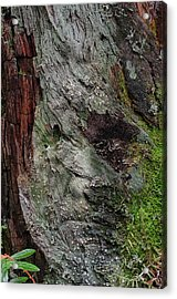 Acrylic Print featuring the photograph Tree Memories # 38 by Ed Hall