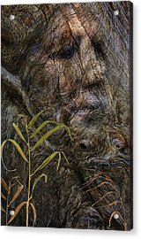 Acrylic Print featuring the photograph Tree Memories # 39 by Ed Hall