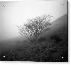 Tree Mist Acrylic Print by Benjamin Garvey