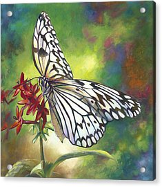Tree Nymph Butterfly Acrylic Print by Nancy Tilles