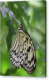 Tree Nymph Acrylic Print by Juergen Roth