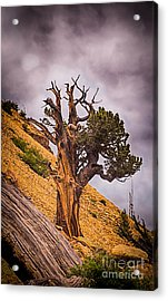 Tree Of Hope Acrylic Print by Dennis Wagner