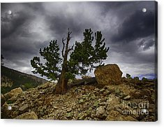Tree Of Life Acrylic Print by Dennis Wagner