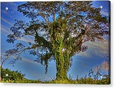 Tree Of Life Acrylic Print by Nadia Sanowar