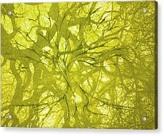 Acrylic Print featuring the mixed media Tree Of Life by Rachel Hames