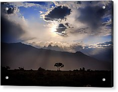 Acrylic Print featuring the photograph Tree Of Light by Cat Connor