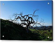 Acrylic Print featuring the photograph Tree Of Light - Landscape by Matt Harang