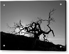 Tree Of Light Silhouette Hillside - Black And White  Acrylic Print