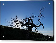 Acrylic Print featuring the photograph Tree Of Light Silhouette Hillside by Matt Harang