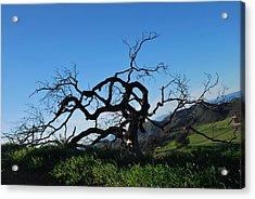 Acrylic Print featuring the photograph Tree Of Light - Slanted Horizon by Matt Harang