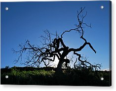 Acrylic Print featuring the photograph Tree Of Light - Straight View 2 by Matt Harang