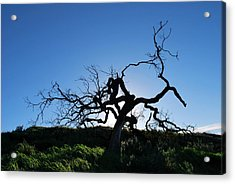 Acrylic Print featuring the photograph Tree Of Light - Straight View by Matt Harang