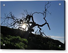 Acrylic Print featuring the photograph Tree Of Light - Sunshine Through Branches by Matt Harang
