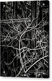 Tree Of Non Life Acrylic Print