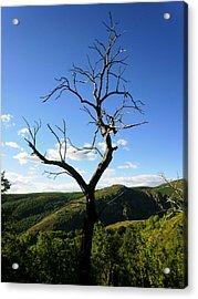 Tree Acrylic Print by Oliver Johnston