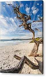 Tree On A Beach Carmel By The Sea California Acrylic Print by George Oze