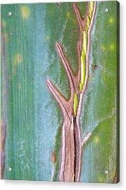 Tree On A Leaf Acrylic Print by Alyona Firth