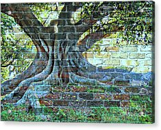 Tree On A Wall Acrylic Print by Leanne Seymour