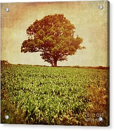 Acrylic Print featuring the photograph Tree On Edge Of Field by Lyn Randle