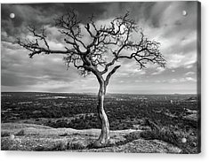 Tree On Enchanted Rock In Black And White Acrylic Print