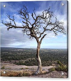 Tree On Enchanted Rock - Square Acrylic Print