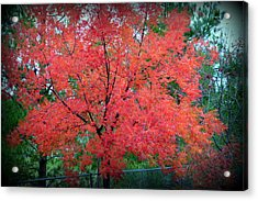 Acrylic Print featuring the photograph Tree On Fire by AJ Schibig