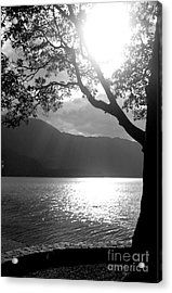 Tree On Lake Acrylic Print