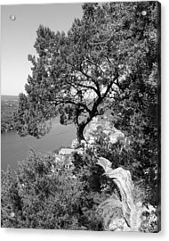 Tree On Mount Bonnell Acrylic Print by Lindsey Orlando