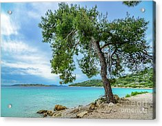 Tree On Northern Dalmatian Coast Beach, Croatia Acrylic Print