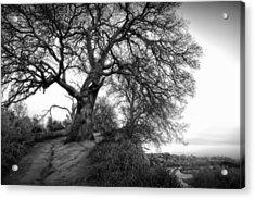 Tree On Ridge - Black And White Acrylic Print