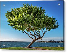 Tree On The Bay Acrylic Print