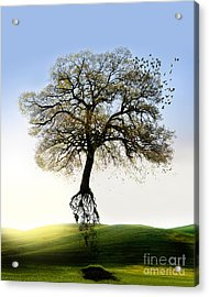 Tree On The Move Acrylic Print