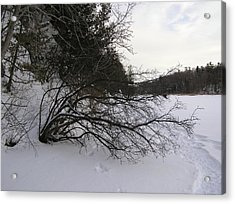 Tree Over Frozen Lake Acrylic Print by Richard Mitchell
