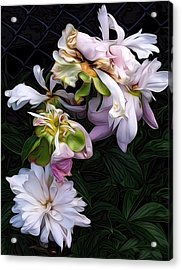 Acrylic Print featuring the digital art Tree Peony by Alexis Rotella