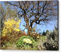 Tree Photo 991 Acrylic Print