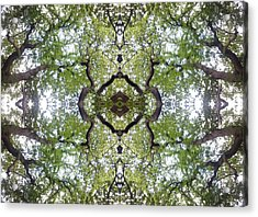 Tree Photo Fractal Acrylic Print