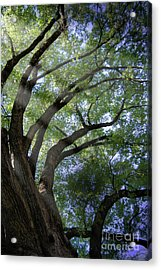Tree Rays Acrylic Print by Brian Jones