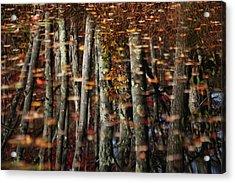 Tree  Reflect Acrylic Print by Karol Livote