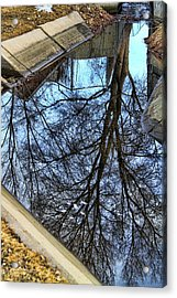 Tree Reflection From No Where Photography Image Acrylic Print by James BO  Insogna