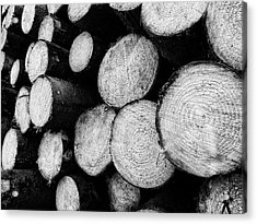 Tree Rings Acrylic Print