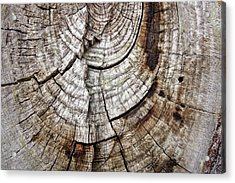 Acrylic Print featuring the photograph Tree Rings - Photography by Ann Powell
