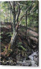 Tree River Wood Acrylic Print by Harry Robertson