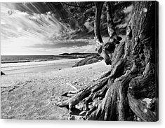 Tree Roots Carmel Beach Acrylic Print by George Oze