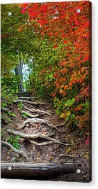 Tree Roots On A Trail Acrylic Print by Art Spectrum