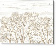 Acrylic Print featuring the photograph Trees Silhouette Brown by Jennie Marie Schell