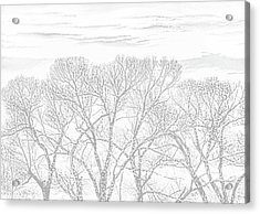 Acrylic Print featuring the photograph Tree Silhouette Gray by Jennie Marie Schell