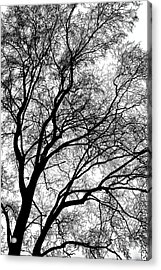 Tree Silhouette Series 1 Acrylic Print