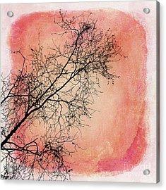 tree silhouettes II Acrylic Print by Priska Wettstein