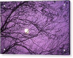 Tree Silhouettes With Rising Moon In Cades Cove, Great Smoky Mountains National Park, Tennessee, Usa Acrylic Print by Altrendo Nature