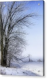 Tree-snow-fog Acrylic Print by Deborah Benoit